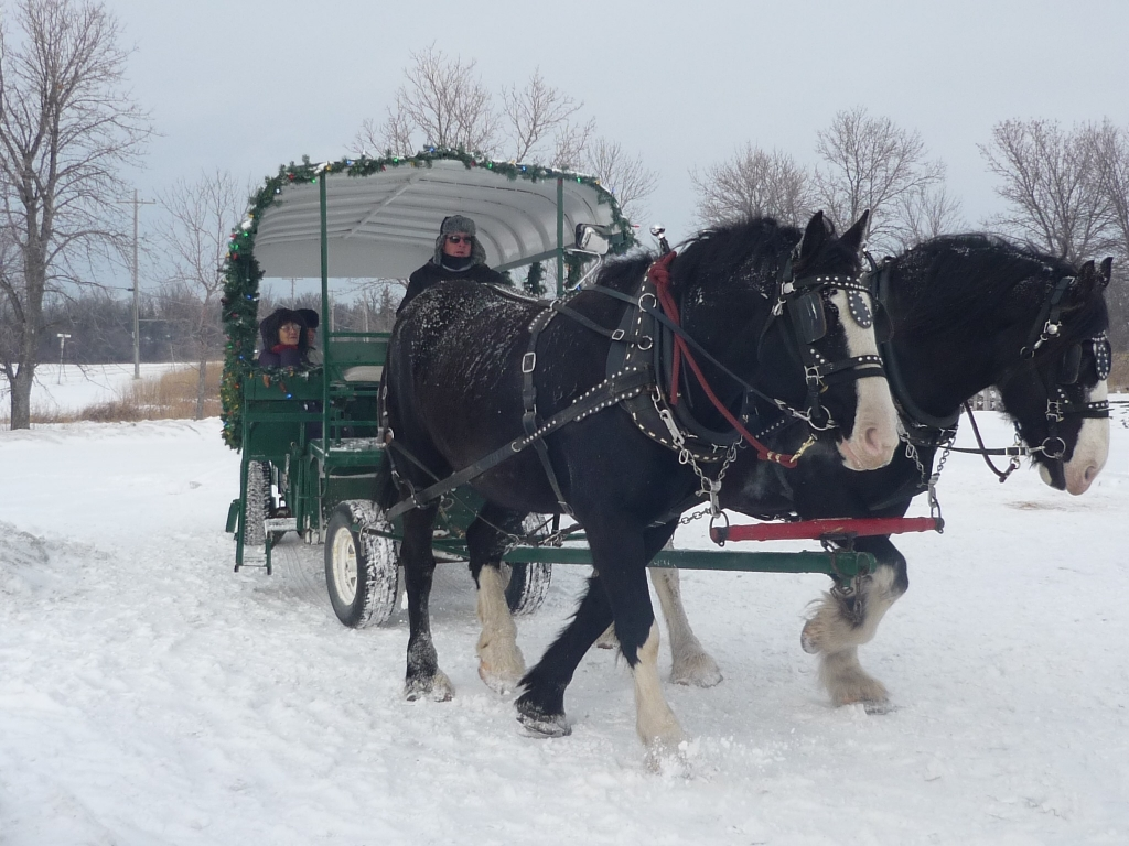 Family Tradition Free Event Sleigh Rides